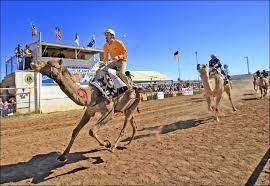 Camel racing in Australia