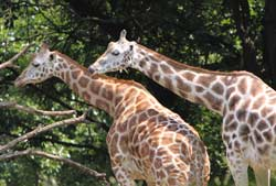 Party With The Animals And Sea Creatures At The Melbourne Zoo