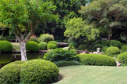 Visiting The Japanese Garden In Brisbane