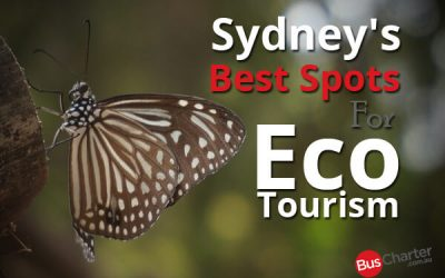 Sydney's Best Spots For Eco Tourism
