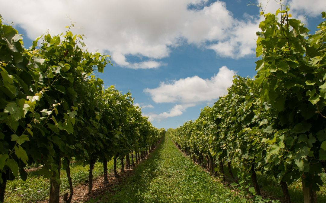 Top 10 places to visit in the Hunter Valley Wine area